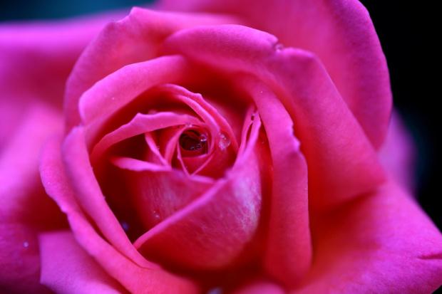 #bokeh #CanonEOS6D #Helios #kwiaty #M42 #makro #przyroda