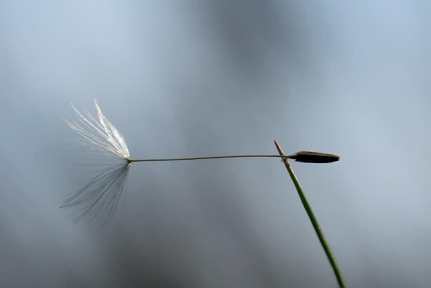 wiatrowskaz #kwiaty #las #makro #motyle #owady #przyroda #zwierzęta