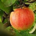 #owoce #jabłko
