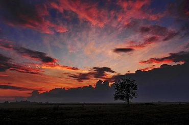 drzewo #drzewo #ZachódSłońca #zachód