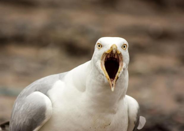 Dawno ptaszkow nie bylo wiec jest mewa:)
