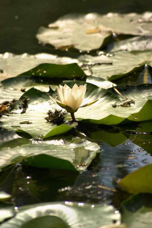 Pośród wodnych fal #Kwiat