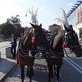 Krakowskie konie #Konie #Kraków