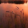 ...po upalnym dniu w ciepłych wodach jeziora #jezioro #woda #zachód