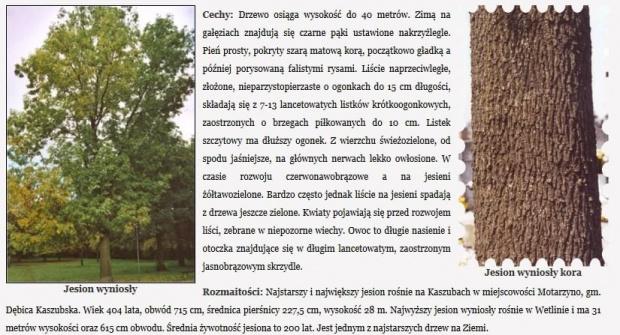 http://images67.fotosik.pl/259/3a1786f6192ed658gen.jpg