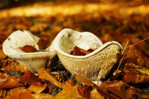 Miseczki pełne jesiennych liści
