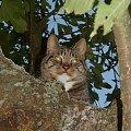 kotka hipnotyzerka #kot #jesień #drzewo