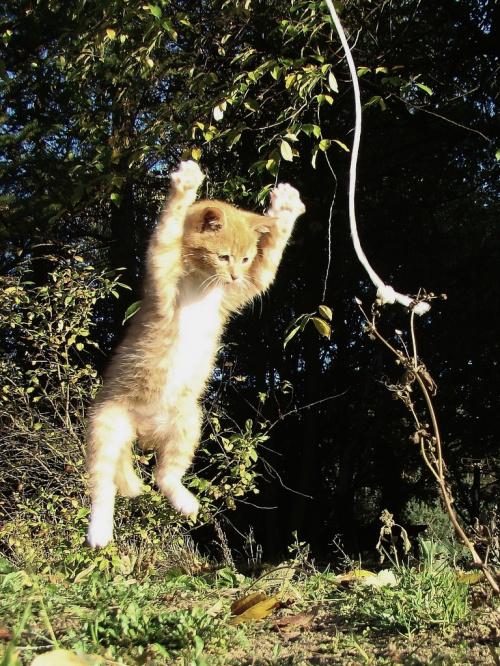 Mój szalony kociak :D