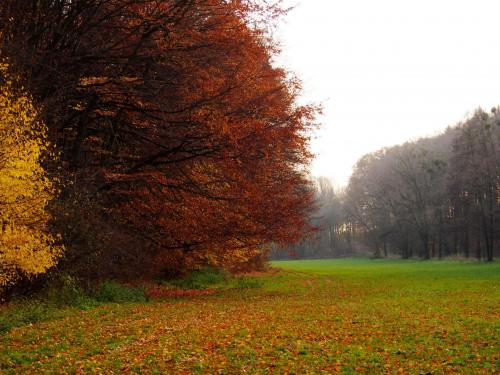 Październikowy krajobraz #Jesień #las #liście #natura #przyroda