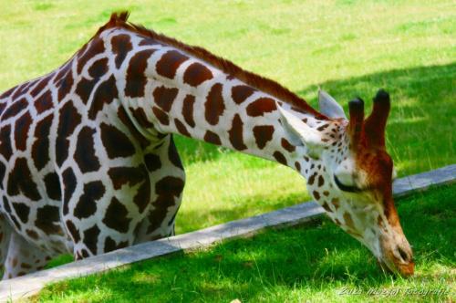 Inspiracji można szukać wszędzie ;) #postacie #przyroda #zabytki #zwierzęta