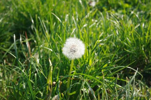 #kwiaty #przyroda #widoki