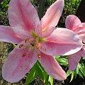 kwiatekk #kwiatek