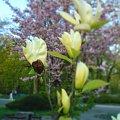 #drzewa #krzewy #kwiaty