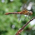 #ogród #owady #ważki