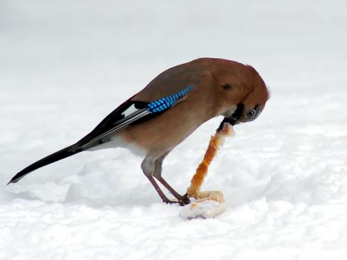 trochę naciągane #przyroda #ptaki #zima #natura