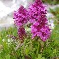 Flora Alp Julijskich #Góry
