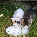 Kotki dwa #koty