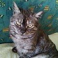 marlenka #kociaki #kot #koteczki #koty