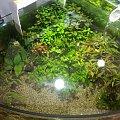 dino breda #Akwarium #breda #dino #RoślinyFiltry #ryby