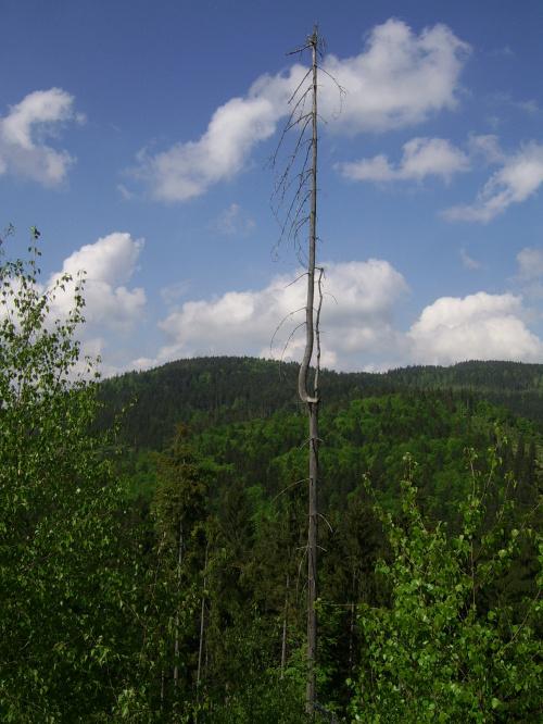 W tle Barania Góra