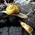 #ślimak #ślimaki #przyroda