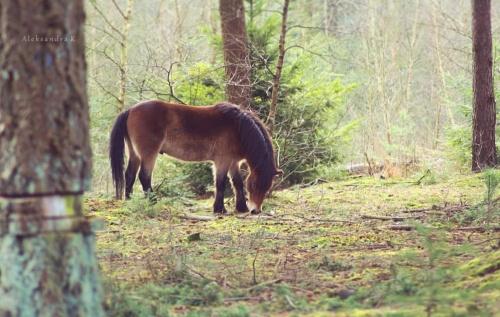 spacerkiem po lesie #krajobraz #las #natura #zwierzęta