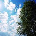 Wiosna 2015 #ogród #przyroda #wiosna
