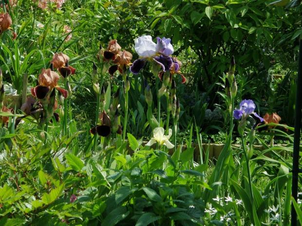 #kwiaty #ogród #wiosna